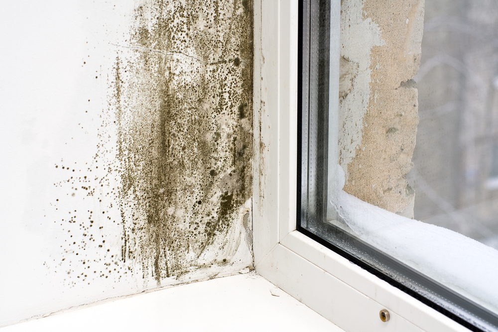 Mold by a window